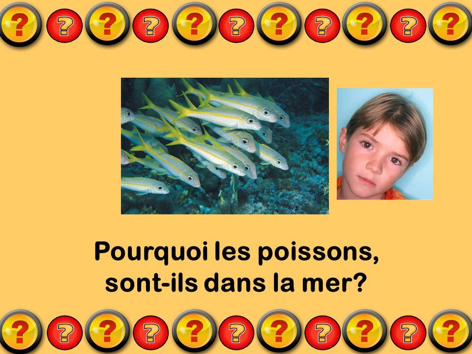 Pourquoi les poissons, sont-ils dans la mer