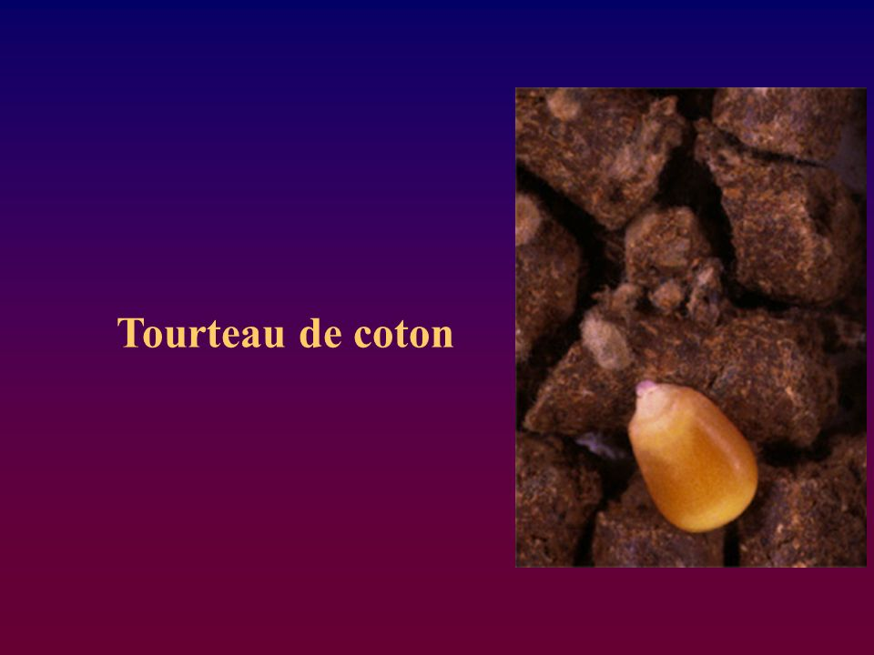 Tourteau de coton