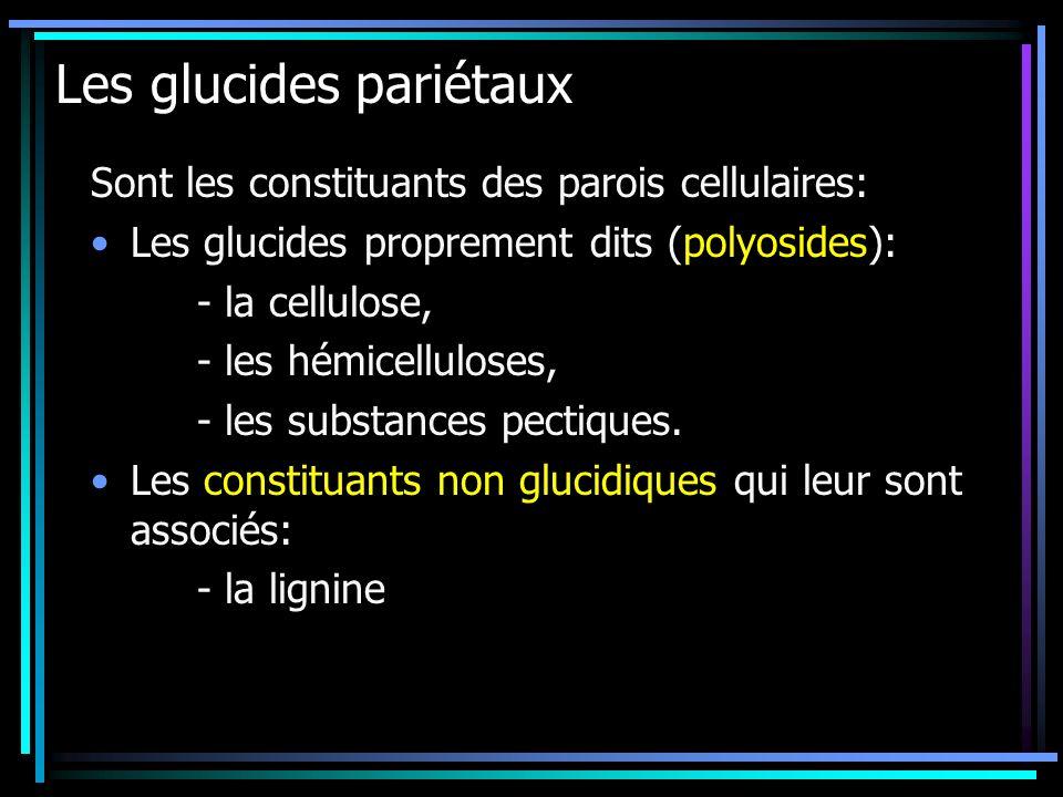 Les glucides pariétaux