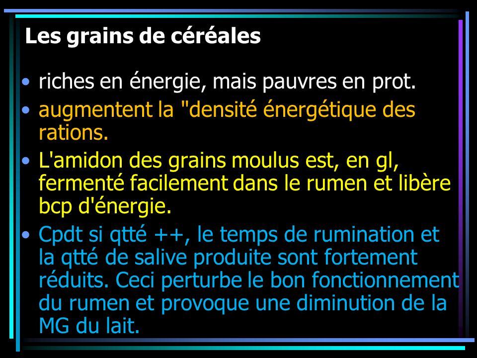 Les grains de céréales riches en énergie, mais pauvres en prot. augmentent la densité énergétique des rations.