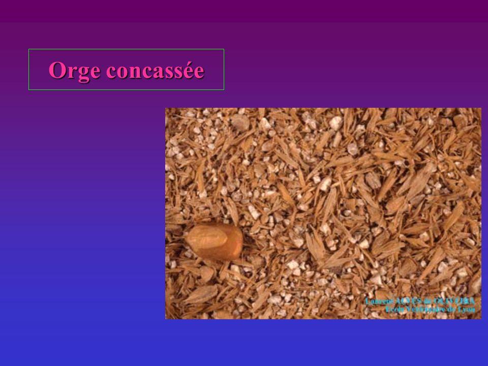 Orge concassée