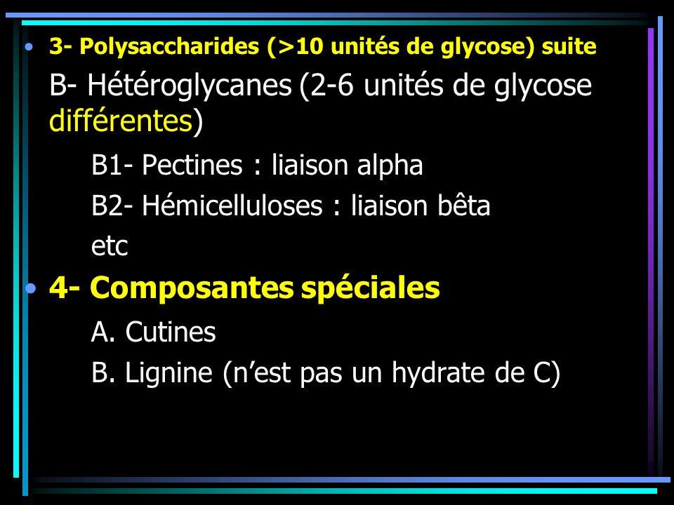 B- Hétéroglycanes (2-6 unités de glycose différentes)