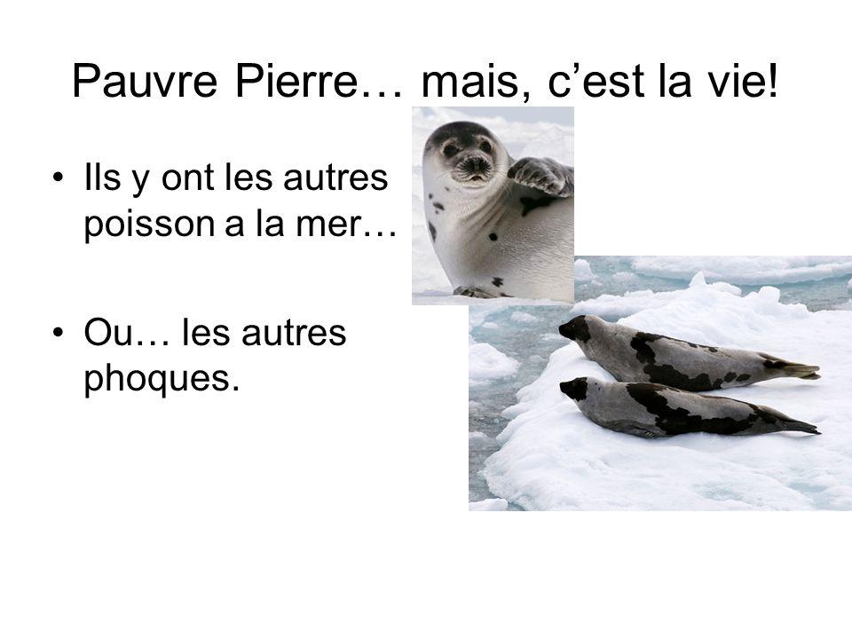 Pauvre Pierre… mais, c'est la vie!