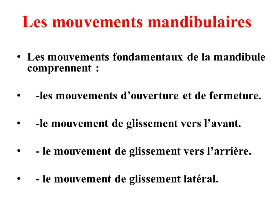 Les mouvements mandibulaires