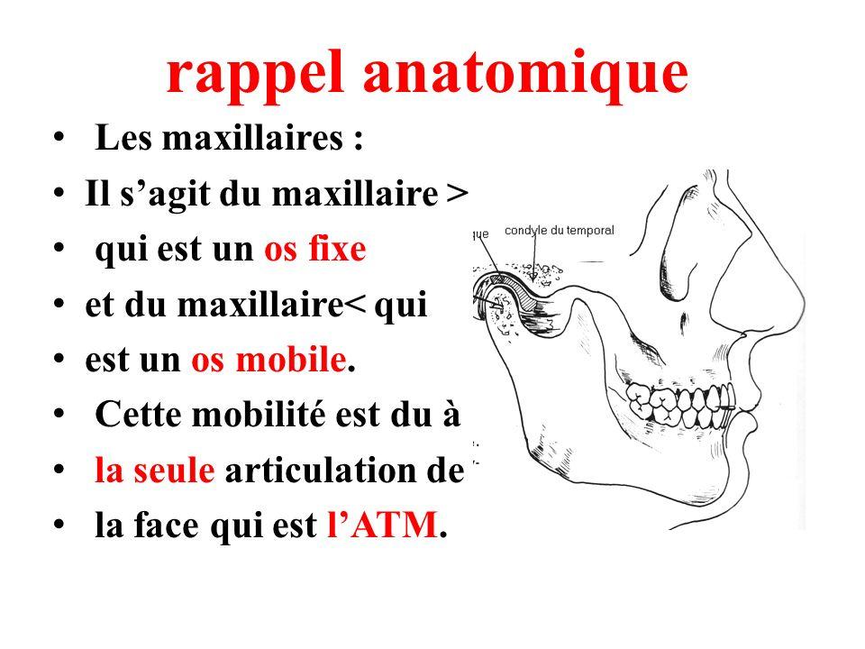 rappel anatomique Les maxillaires : Il s'agit du maxillaire >