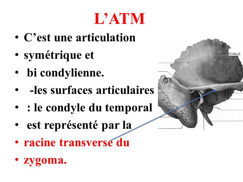 L'ATM C'est une articulation symétrique et bi condylienne.