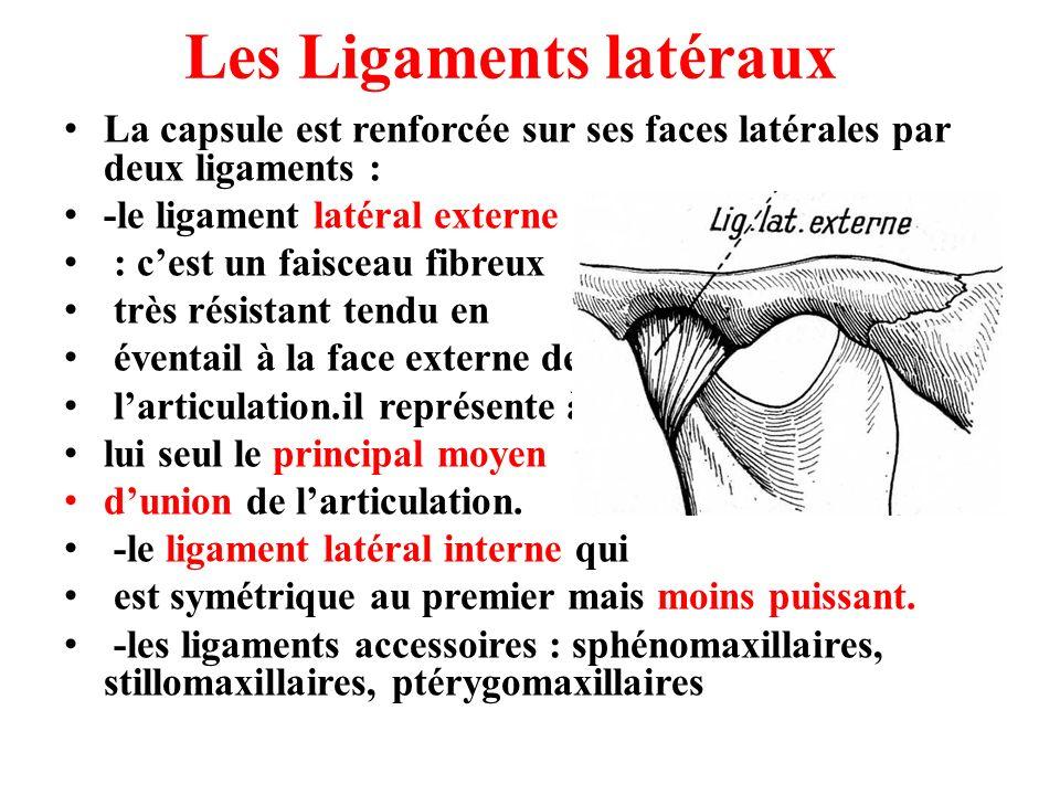 Les Ligaments latéraux