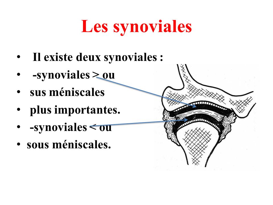 Les synoviales Il existe deux synoviales : -synoviales > ou