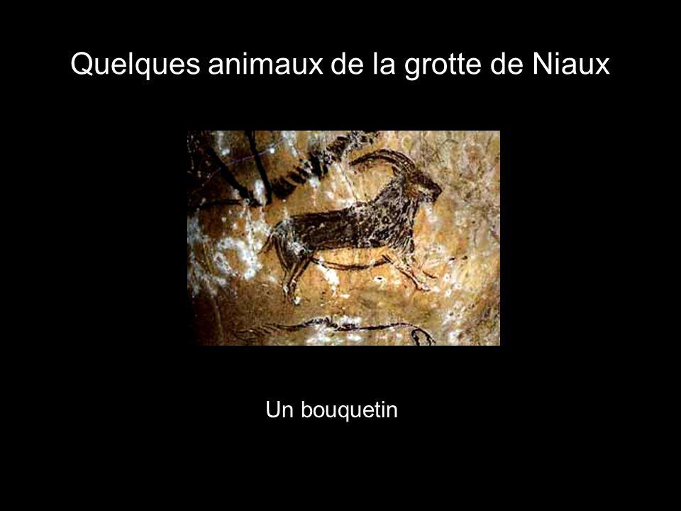 Quelques animaux de la grotte de Niaux