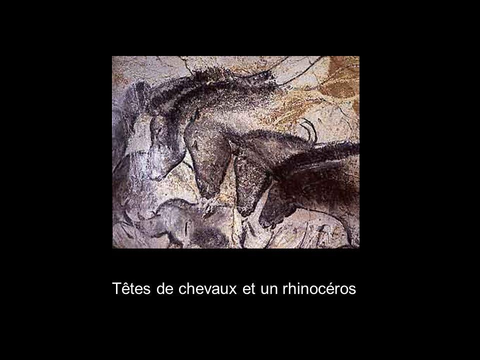 Têtes de chevaux et un rhinocéros
