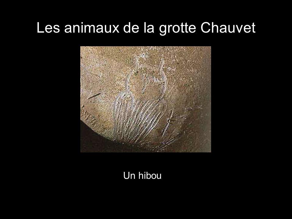 Les animaux de la grotte Chauvet