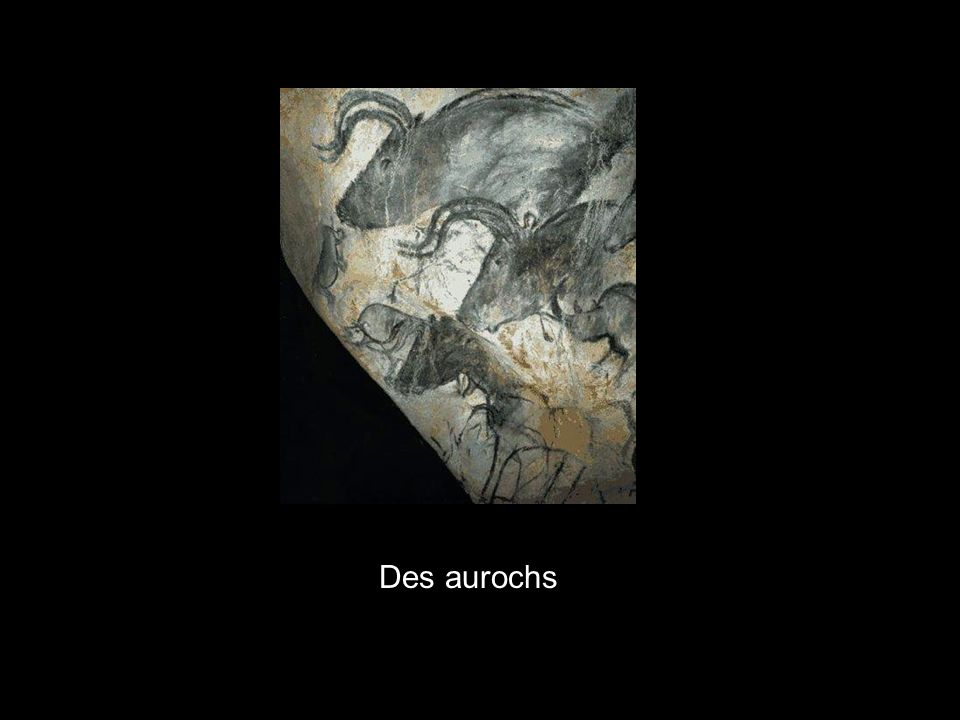 x Des aurochs