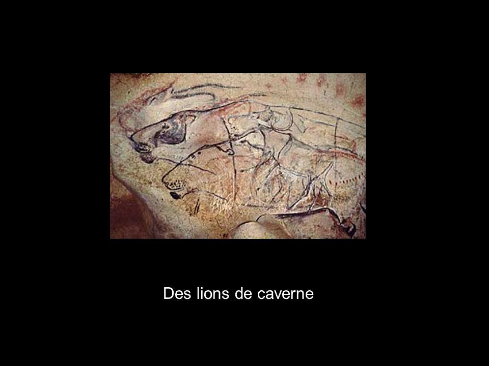 x Des lions de caverne