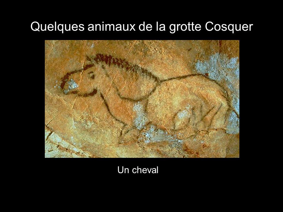 Quelques animaux de la grotte Cosquer