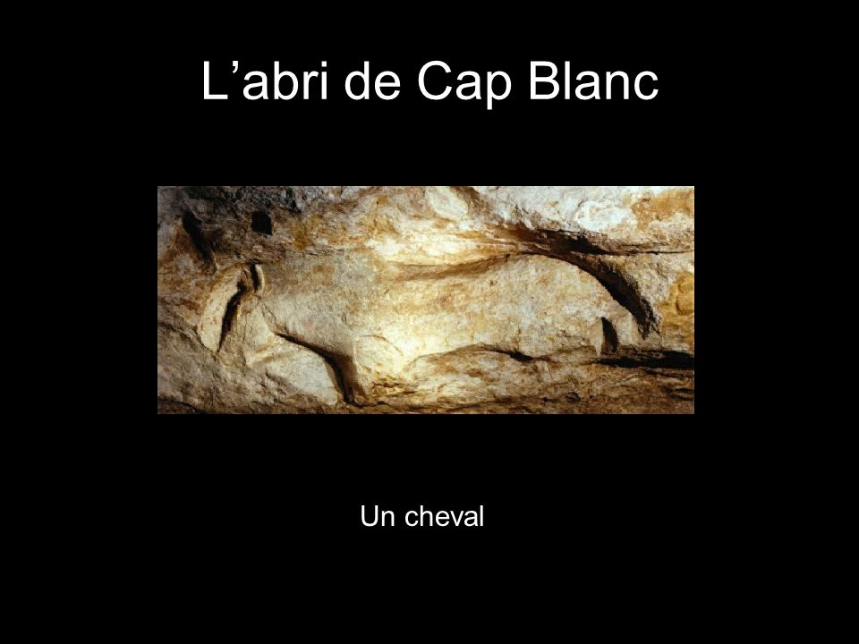 L'abri de Cap Blanc Un cheval