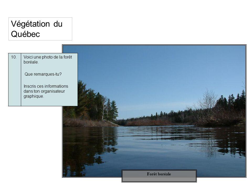 Végétation du Québec 10. Voici une photo de la forêt boréale.