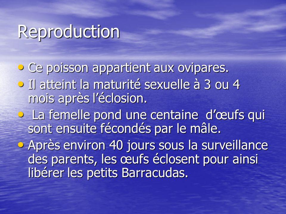 Reproduction Ce poisson appartient aux ovipares.