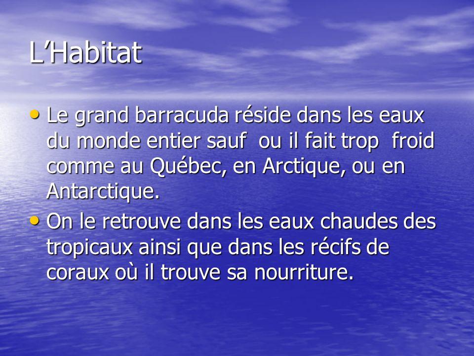 L'Habitat Le grand barracuda réside dans les eaux du monde entier sauf ou il fait trop froid comme au Québec, en Arctique, ou en Antarctique.