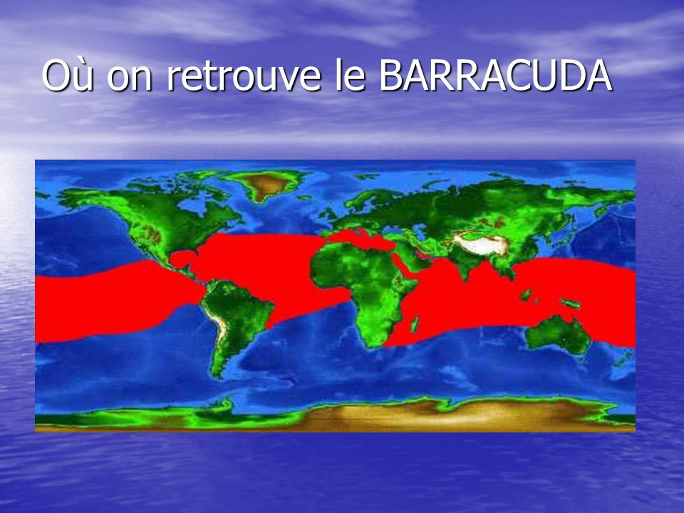 Où on retrouve le BARRACUDA