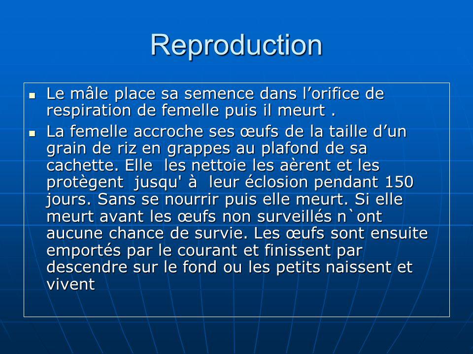 Reproduction Le mâle place sa semence dans l'orifice de respiration de femelle puis il meurt .