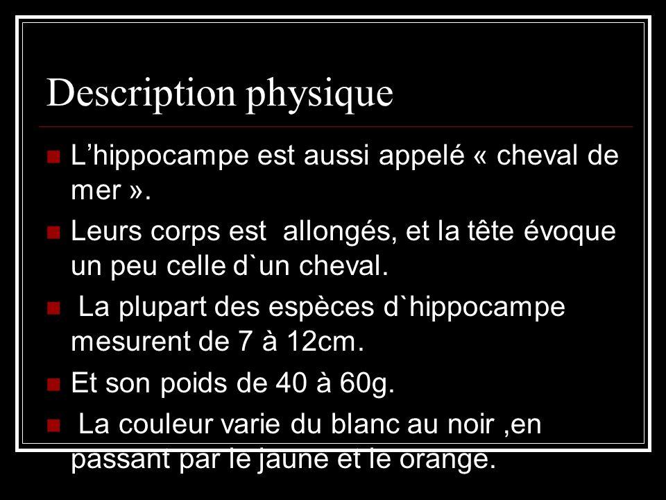 Description physique L'hippocampe est aussi appelé « cheval de mer ».