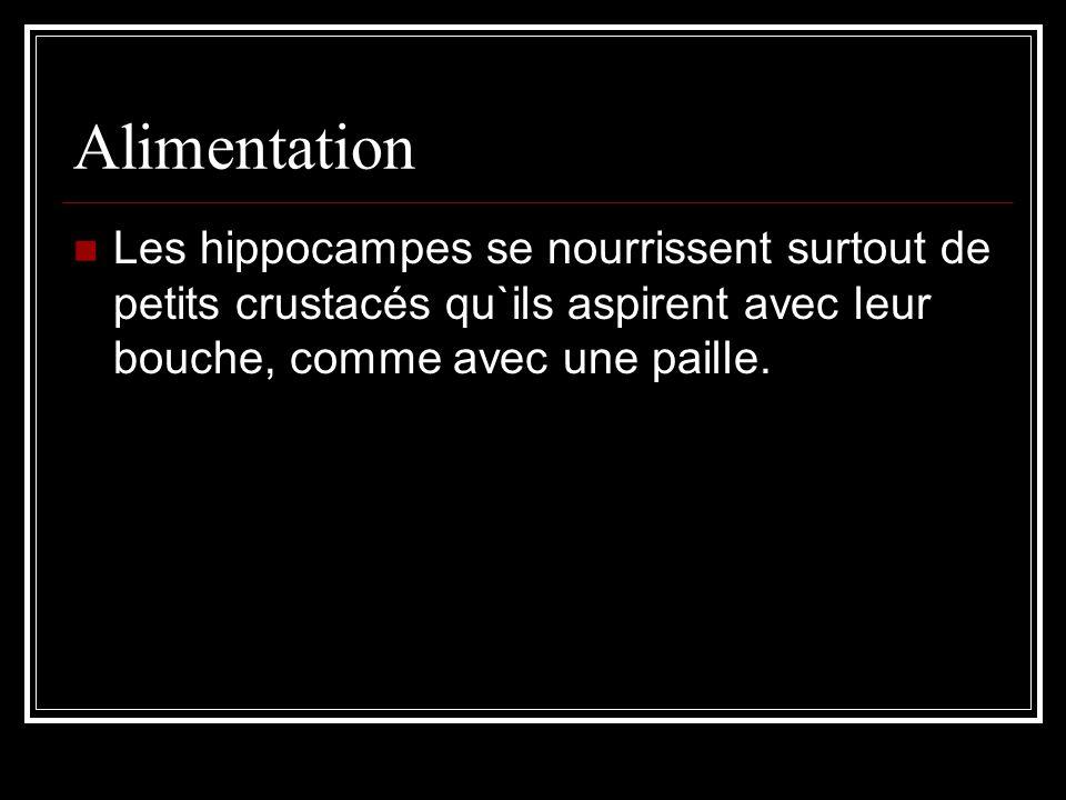Alimentation Les hippocampes se nourrissent surtout de petits crustacés qu`ils aspirent avec leur bouche, comme avec une paille.