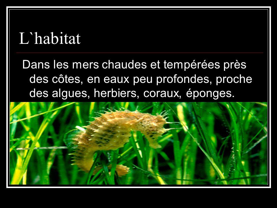 L`habitat Dans les mers chaudes et tempérées près des côtes, en eaux peu profondes, proche des algues, herbiers, coraux, éponges.