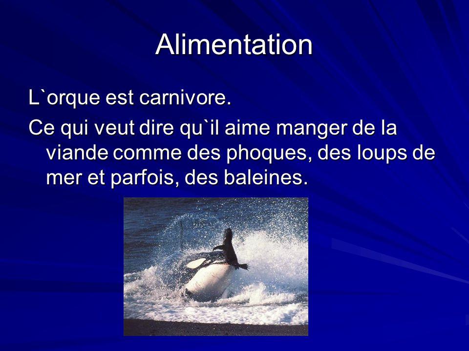Alimentation L`orque est carnivore.