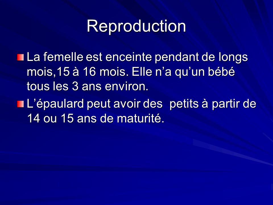 Reproduction La femelle est enceinte pendant de longs mois,15 à 16 mois. Elle n'a qu'un bébé tous les 3 ans environ.