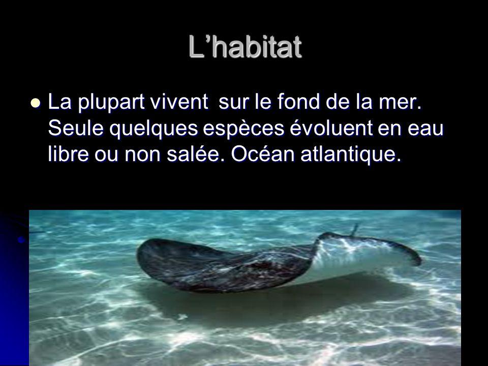 L'habitat La plupart vivent sur le fond de la mer.