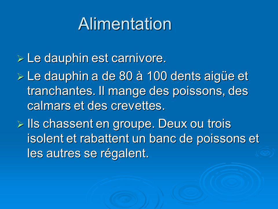 Alimentation Le dauphin est carnivore.