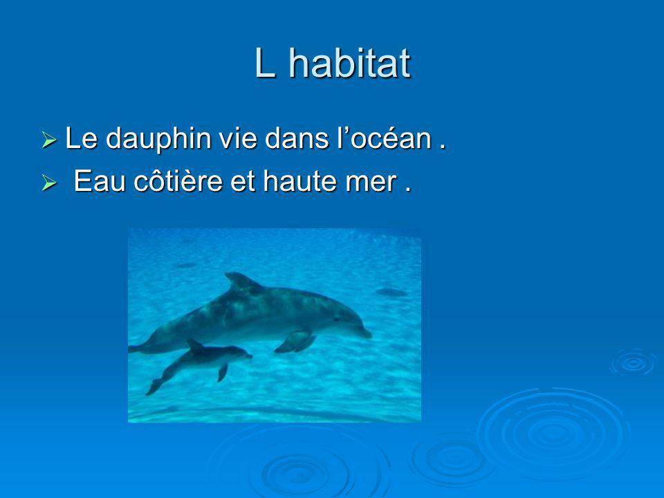L habitat Le dauphin vie dans l'océan . Eau côtière et haute mer .