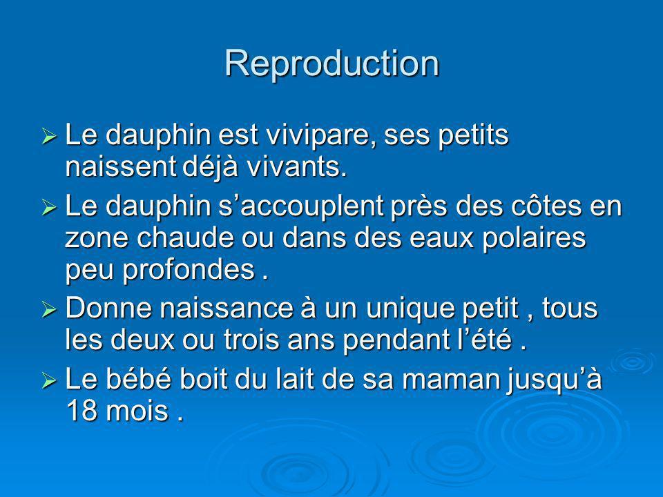 Reproduction Le dauphin est vivipare, ses petits naissent déjà vivants.