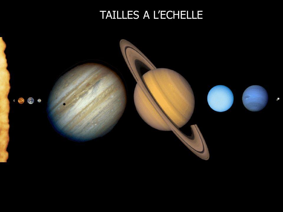 TAILLES A L'ECHELLE