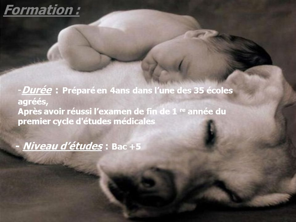 Formation :