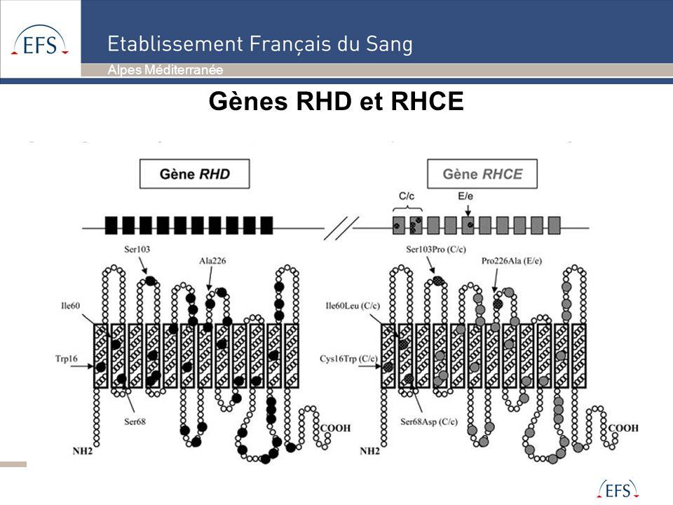 Gènes RHD et RHCE