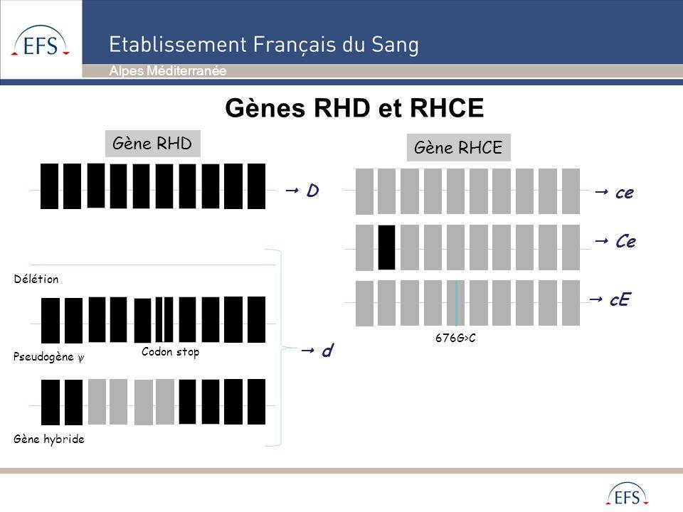 Gènes RHD et RHCE Gène RHD Gène RHCE  D  ce  Ce  cE  d Délétion