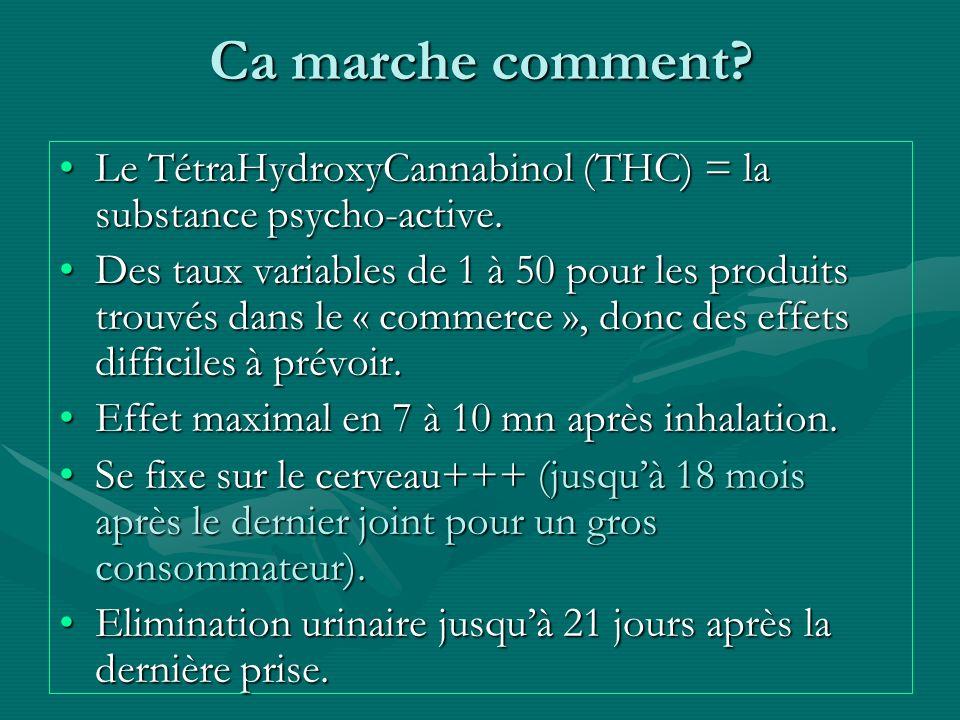 Ca marche comment Le TétraHydroxyCannabinol (THC) = la substance psycho-active.