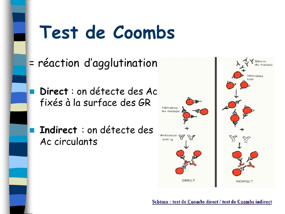 Test de Coombs = réaction d'agglutination