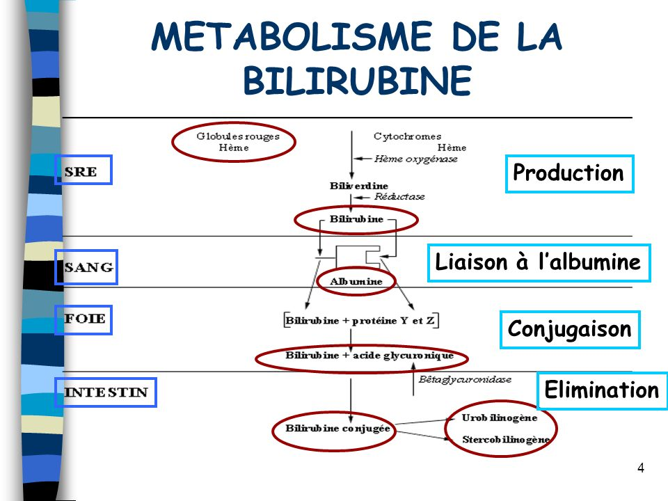METABOLISME DE LA BILIRUBINE