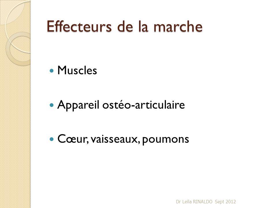 Effecteurs de la marche