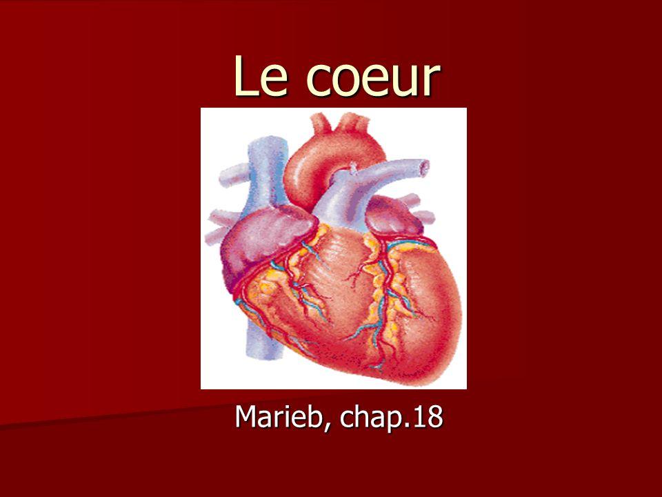 Le coeur Marieb, chap.18