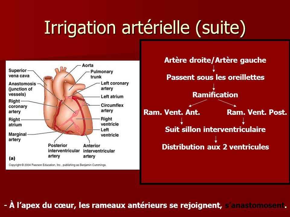 Irrigation artérielle (suite)