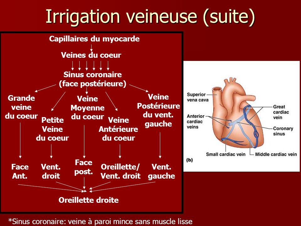 Irrigation veineuse (suite)
