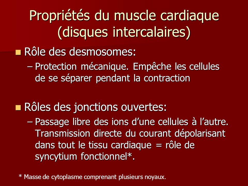 Propriétés du muscle cardiaque (disques intercalaires)