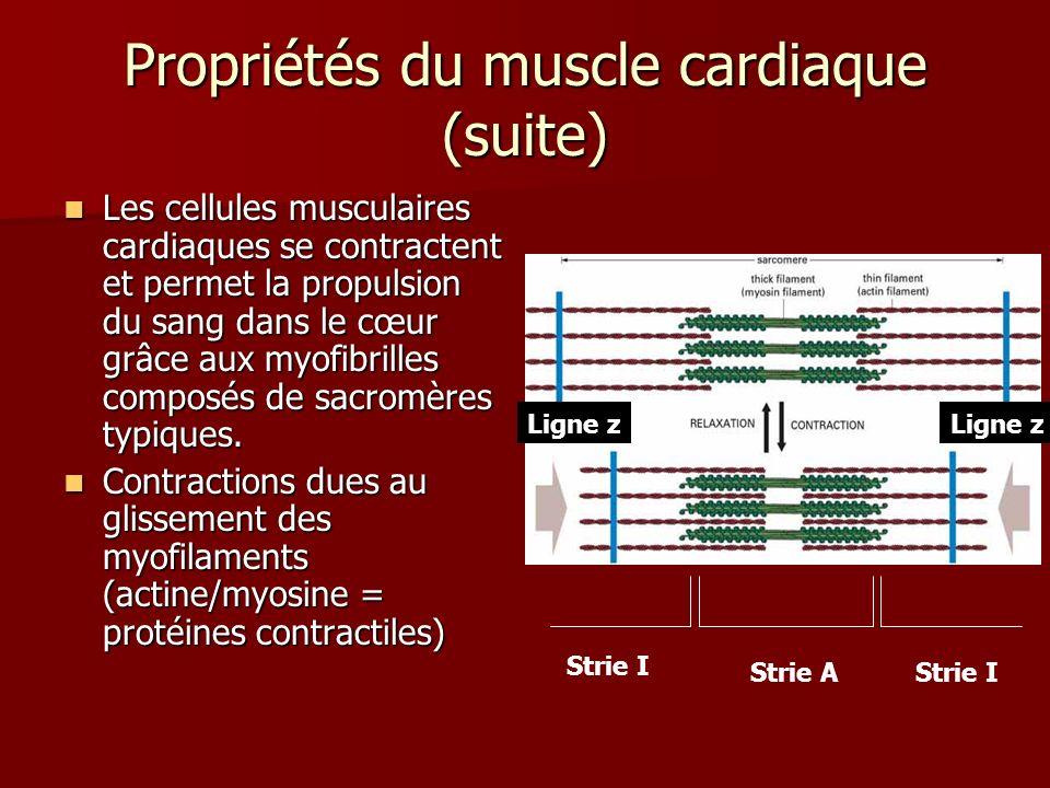 Propriétés du muscle cardiaque (suite)
