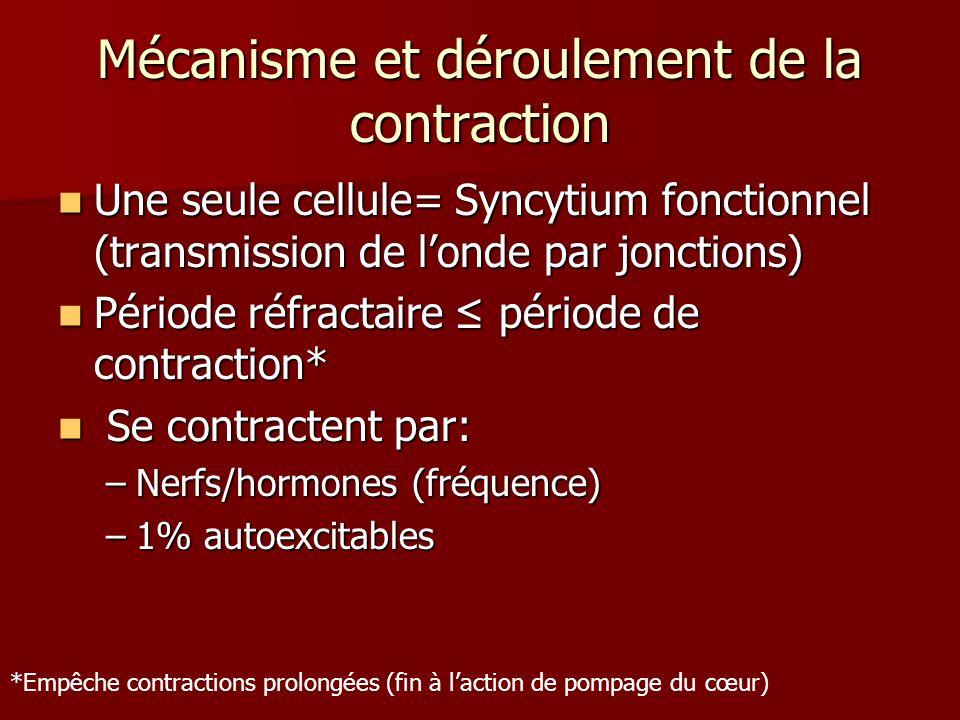 Mécanisme et déroulement de la contraction