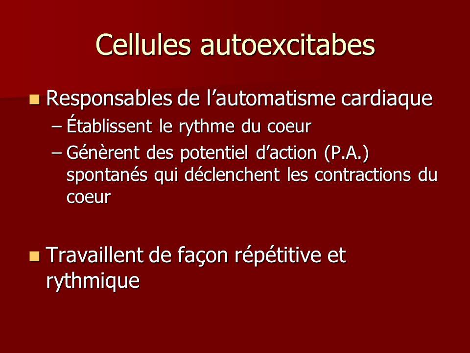 Cellules autoexcitabes