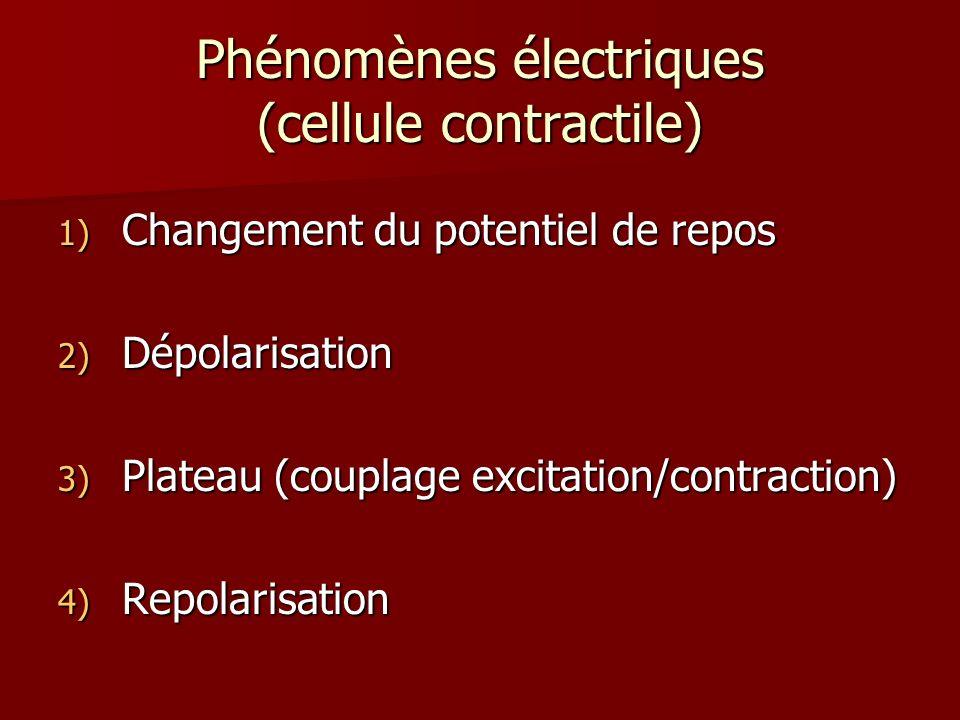 Phénomènes électriques (cellule contractile)