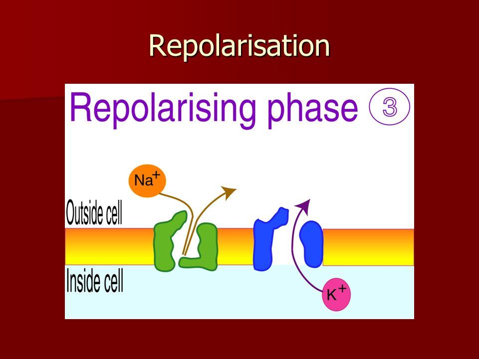 Repolarisation